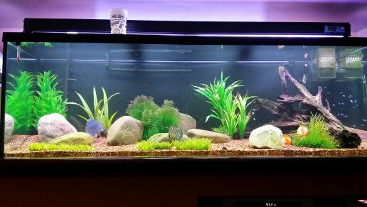 Whole tank