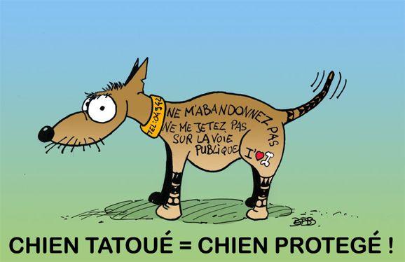 Une sympathique et efficace façon de rappeler aux propriétaires de chiens qu'il est indispensable d'identifier son animal. Alors puce électronique (maintenant obligatoire) ou tatouage ? Pour nous sans hésitation le chien tatoué de Bebb rallie nos suffrages, nous n'en voulons pas d'autre ! - ACTU Animaux - Bebb tatoue son chien !