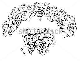 17 Best Grape Reference Images On Pinterest Grape Vines