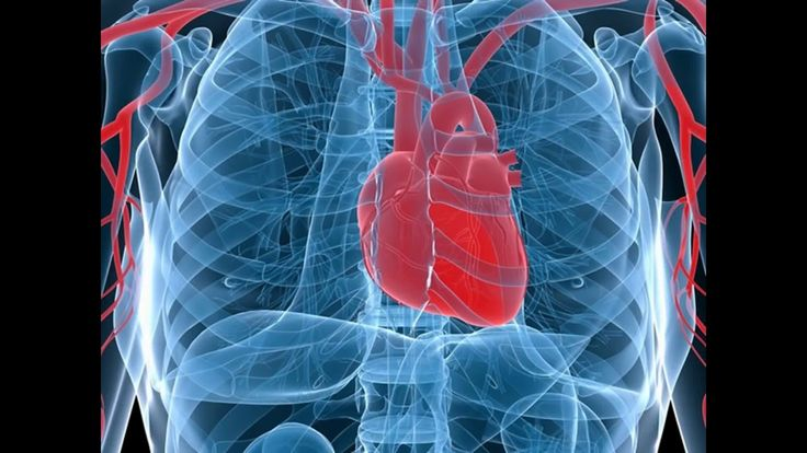 funktion von herz funktion von herz Das Herz liegt als etwa faustgroßes Organ hinter dem Brustbein. Es sitzt eingebettet zwischen den beiden Lungenflügeln dem Zwerchfell auf.funktion von herz In seiner Form entspricht es in etwa einem Dreieck mit nach unten zeigender und abgerundeter Spitze funktion von herz. Man kann sich das Herz wie einen hohlen Muskel vorstellen.