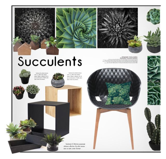 """Succulents"" by snowbell ❤ liked on Polyvore featuring interior, interiors, interior design, home, home decor, interior decorating, Abigail Ahern, La Femme, Metalmobil and Chronicle Books"