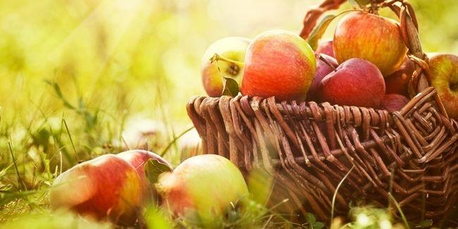 Walau Kamu Bukan Snow White, Makan Apel Bagus Untuk Kesehatanmu | Tips Wanita Sehat