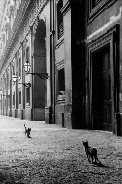 "supruntu:  Two Cats, Leonard Freed – Naples, Italy 1958.  Looks like ""High Noon."""