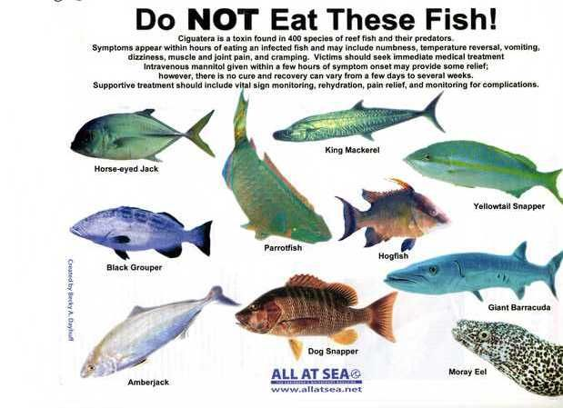 Do not eat these sea fish hfd vitamins trace for Fish not eating