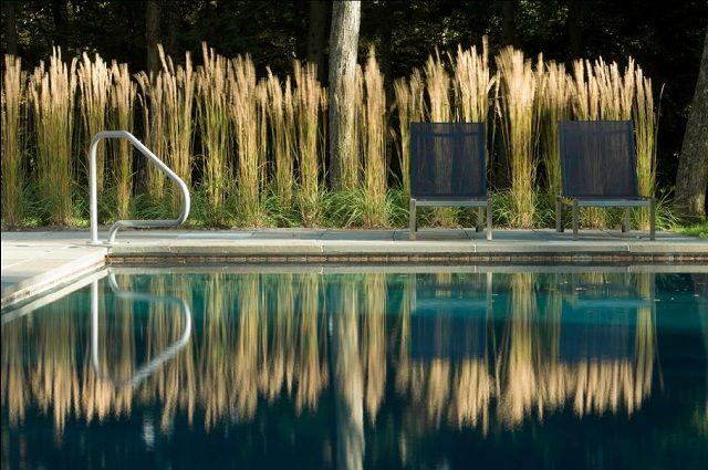 Garten Gestaltung 100 Ideen Pool hohes Ziergras zwei Edelstahl Stühle