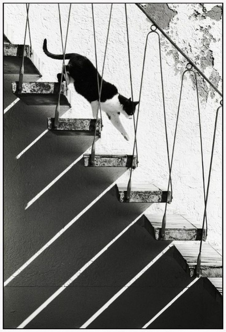 Untitled: Cat Paw, Cat Photography, Catwalks, Cat Walks, Black And White, Shadows Photography, Cat Stairs, Black White, White Cat