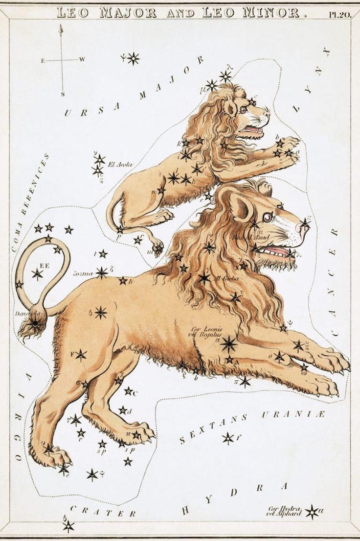 Conoce los mitos detrás de cada signo zodiacal y su constelación. Tarot, Zodiac Signs Pictures, Fine Art Prints, Canvas Prints, Framed Prints, Leo Lion, Zodiac Constellations, Leo Zodiac, Animals