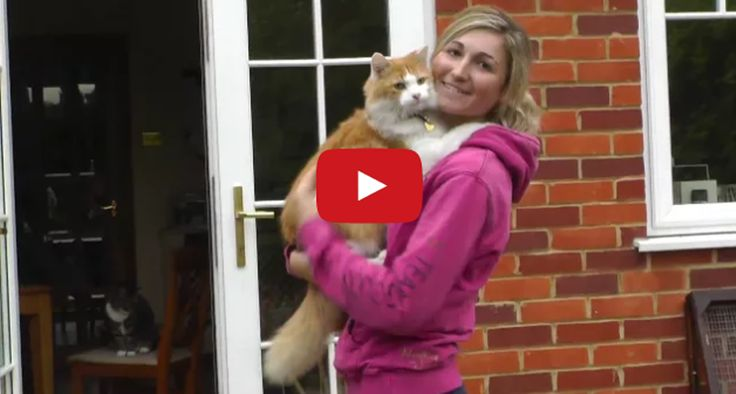 Marmalade the Hugging Rescue Cat is Saved from Death. What an inspiring story about a feral rescue cat who finally finds his forever home.