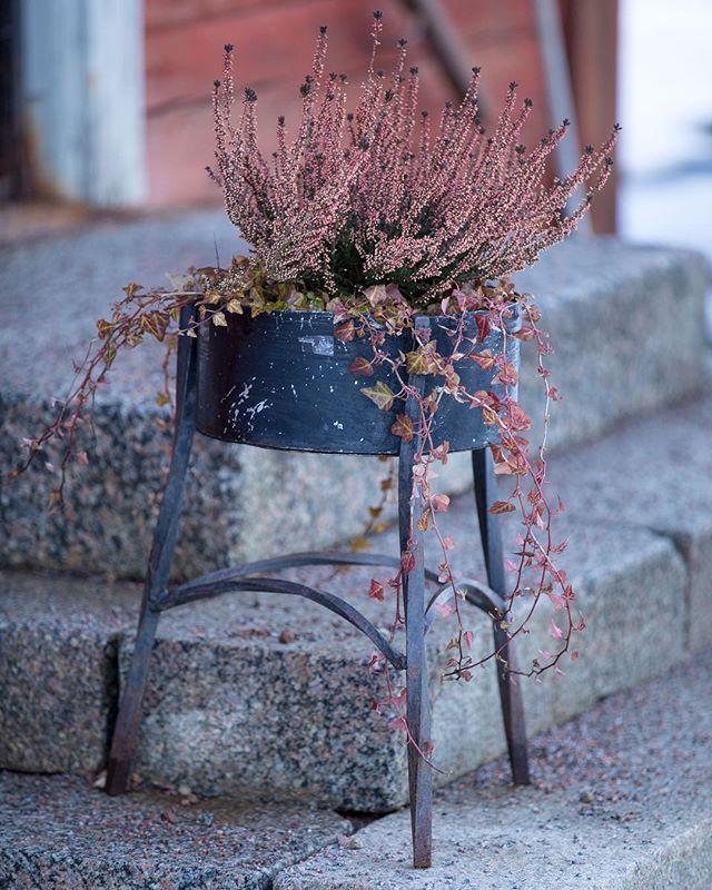 Vinterblomster i Valla. #linköping #meralink #valla #vinter #blommor #linköpinglive #canon5dmkiv #winter