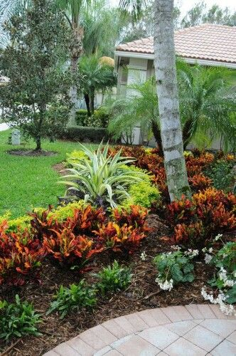 Croton plants bordered by lime green and dark green, can incorporate pretty annuals between spaces of leafy green, edge with skiny lengthy plants