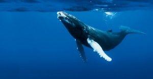 Entrevista Sylvia Earle: El Océano Está Muriendo