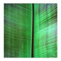 Banana Leaf Tropical Shower Curtain > Korpita Beach Coastal Art Shower Curtains > RebeccaKorpita