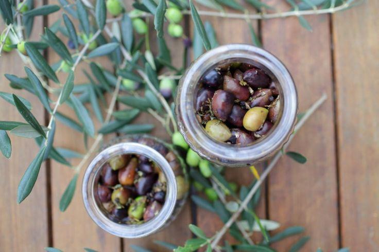 Curing Olives WWW.EFFIGEORGIA.COM.AU