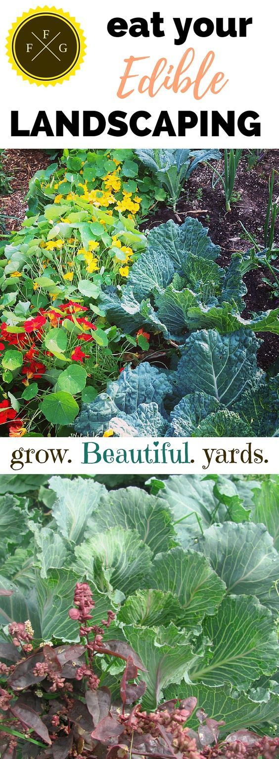 Creative environments landscape co edible gardens - Creative Environments Landscape Co Edible Gardens How To Create Beautiful Edible Landscaping Download