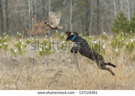 Стоковые фотографии и изображения охота | Shutterstock