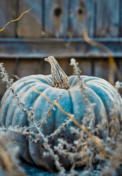 Autumn Colors, Blue Pumpkin.