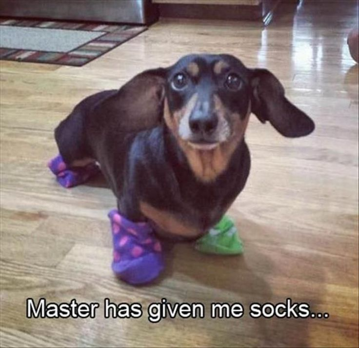Funny Animal Pictures Of The Day – 27 Pics #funnypics #funny #lol