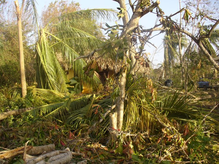 Hurricane Dean Ranchos Puerto Morelos - Aug 2007 - Just thought as this is looking like it's going to hit in the next few days, maybe we should have a dedicated thread for updates, what the hotels are doing and how the hotels are looking after the Hurricane.