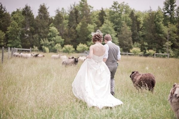 Boeren bruiloft iets voor jou? Vergeet dan niet een trouwfoto in de weilanden te maken!