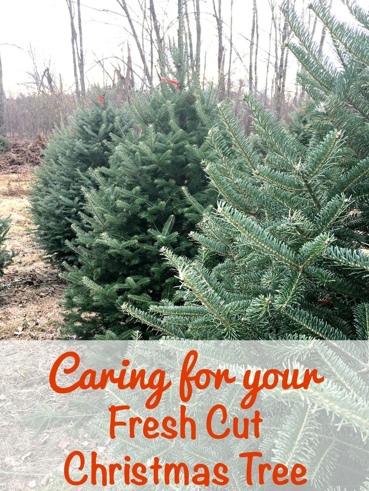 16 best Christmas Tree Promotion Board images on Pinterest ...