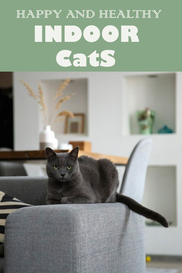 7 Tips For Happy And Healthy Indoor Cats Pooch N Cat Living Room Decor Modern Cute Apartment Diy Home Decor On A Budget