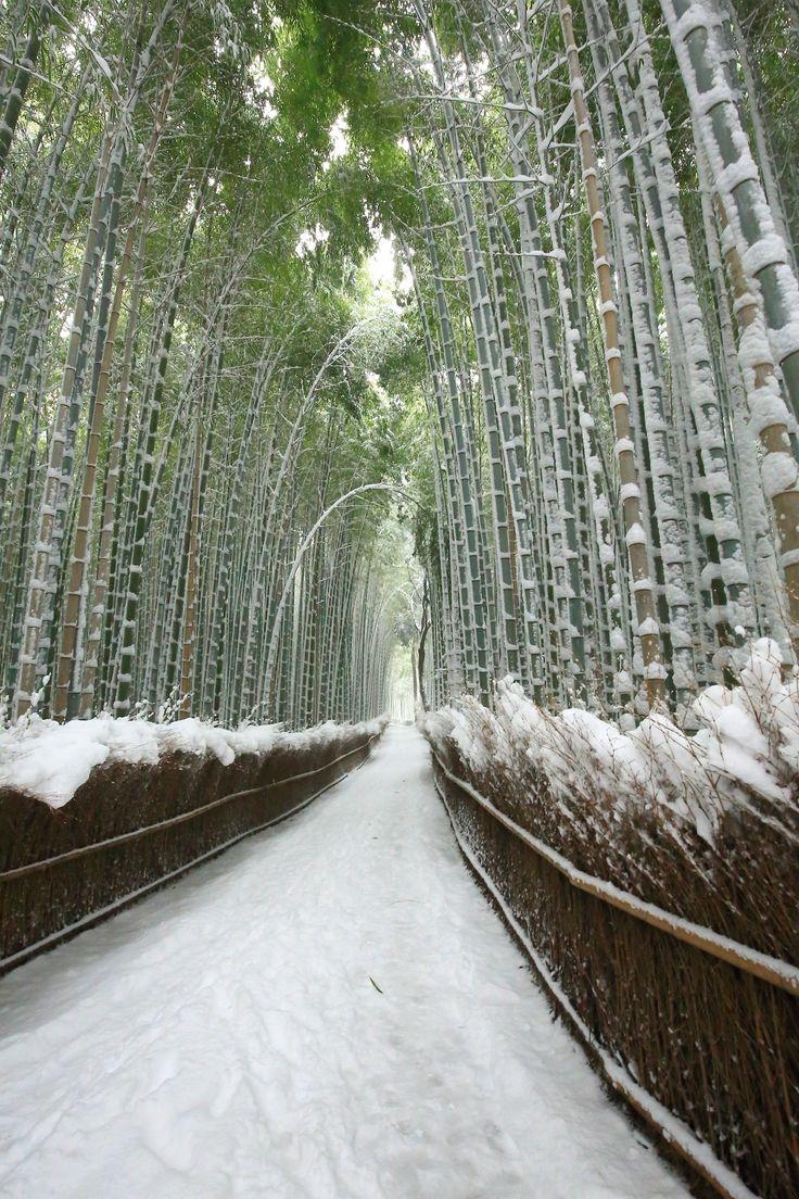 Kyoto Arashiyama bamboo grove snowy landscape