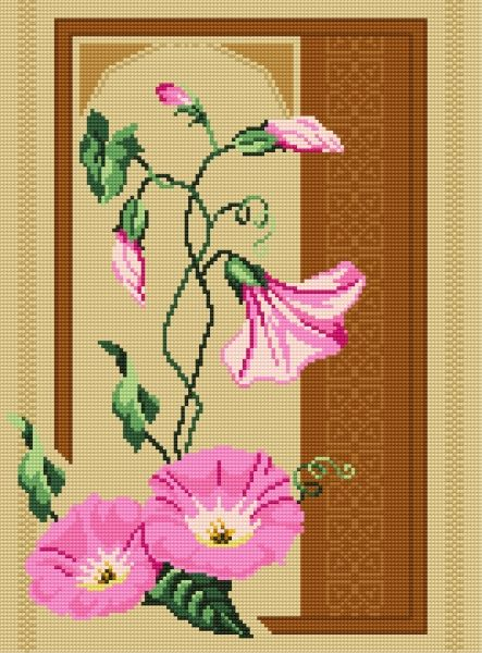 Convolvulus (plant, flower)
