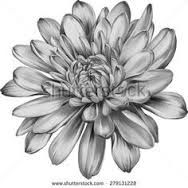 Image result for chrysanthemum tattoos