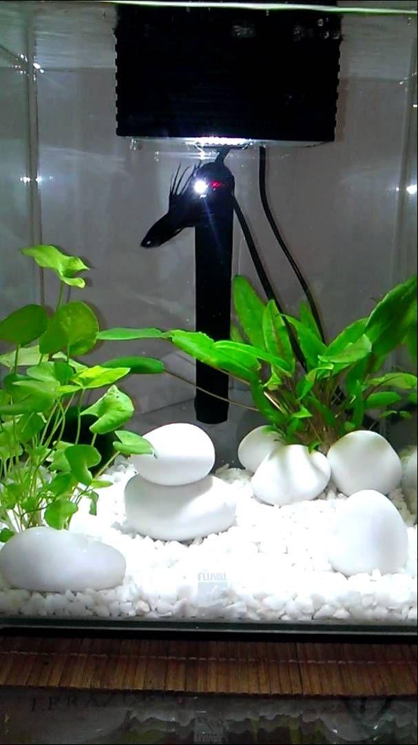 5 gallon tank, Fluval Chi Aquarium Kit, aprox $85: good betta tank