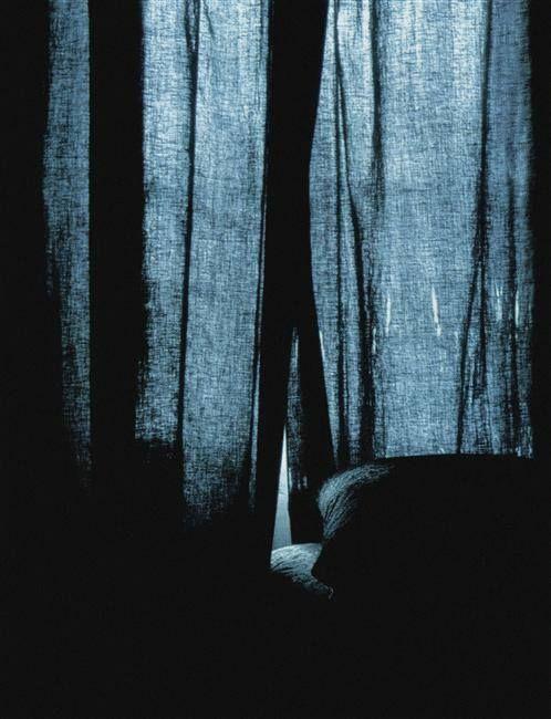 By daniel boudinet bluebird delphinium colour for Barthes la chambre claire