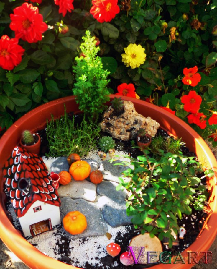 Just another fairy garden - smells like pumpkin pie?