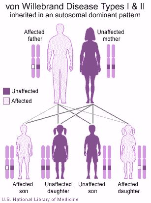 von willebrand disease - Google Search