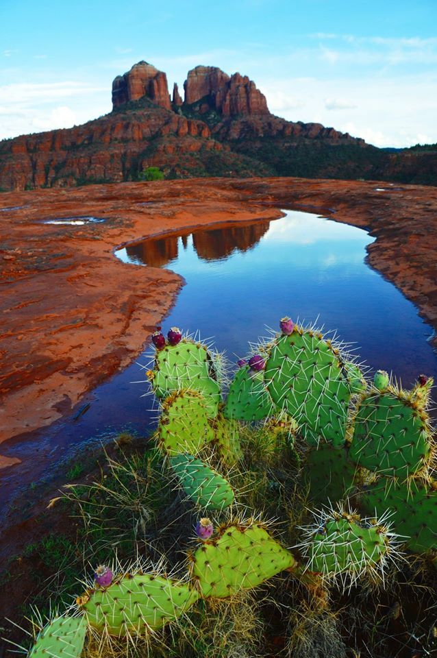 Prickly Pear at Cathedral Rock ~ Sedona, Arizona