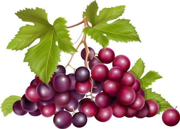 tube Raisin - Winogrona przezroczysty png - Trauben - Uva