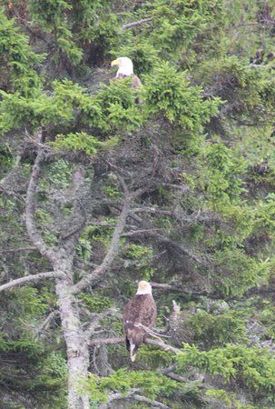 Photo of Downeast Charter Boat Tours