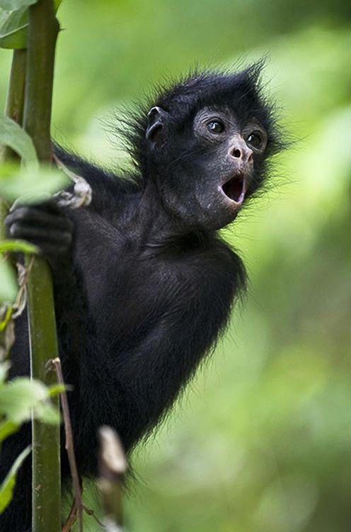 """ooh, I'm gonna tell!"" young monkey"