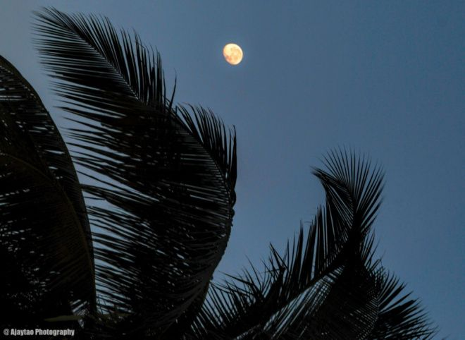 Moon amidst swaying palms - Ajaytao