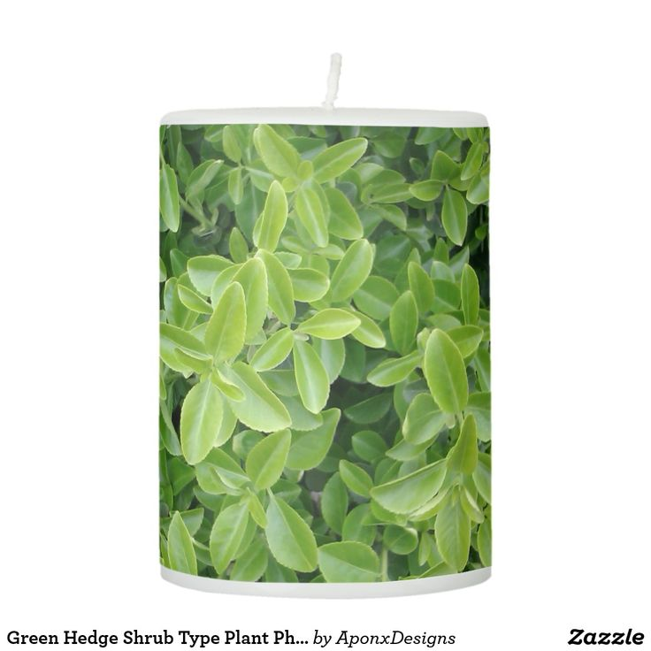 Green Hedge Shrub Type Plant Photograph Candle