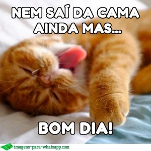 Imagens De Bom Dia Para Whatsapp