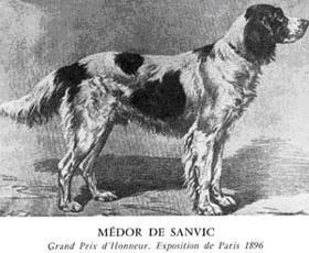 Épagneul français de chien - - Yahoo Image Search Results
