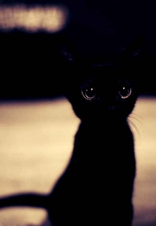 This cat remindes me of Toothless from how to train your dragon =) Soooooo Cute