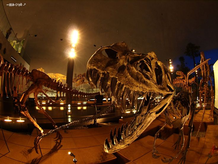 Dinosaur museum, Fukui, Japan