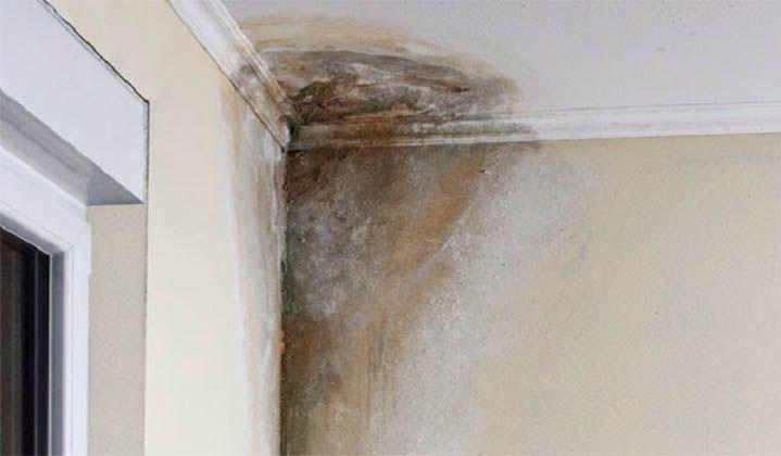 A humidade na nossa casa ou local de trabalho pode estar a prejudicar imenso a…