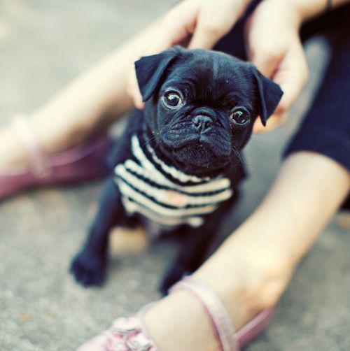 That Sweater My Pug Will Be Just As Fashionable As My Children
