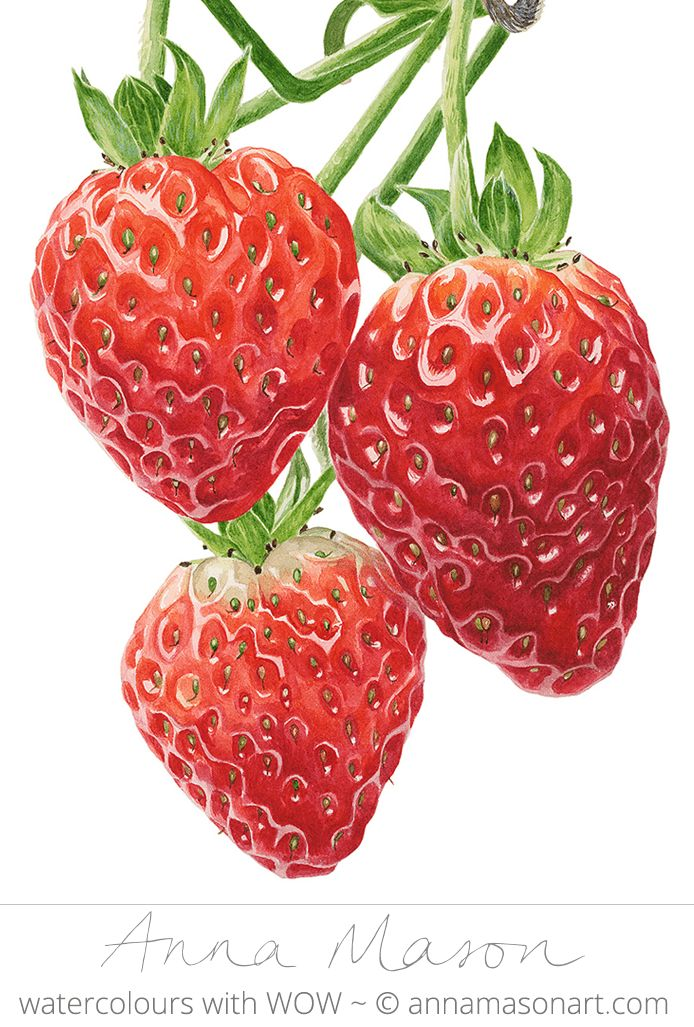 "Strawberries © 2009 ~ annamasonart.com ~ 23 x 31 cm (9"" x 12"")"