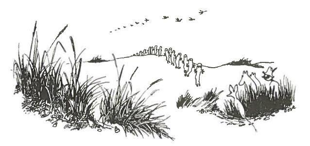 """""""Kaukana dyyneillä pienet ikuiset vaeltajat liikkuivat katse jäykästi suunnattuna taivaanrantaan. -He menevät itää kohti, huomautti Niisku. Ehkä olisi varminta seurata heitä. He tuntevat jäsenissään, tiedättehän."""" Muumipeikko ja pyrstötähti"""