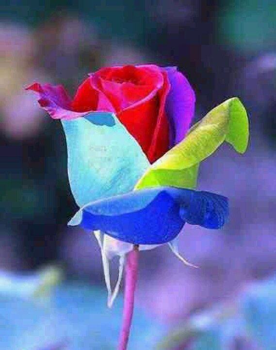 116 best images about decorative tie dye flowers on for Pictures of rainbow roses