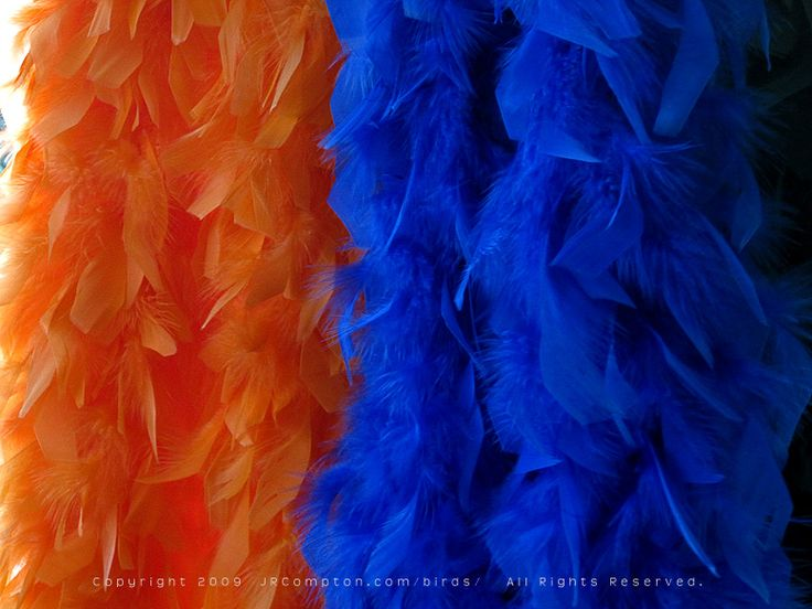 orange-n-blue-boas: Extravagant Blue, Combos Blueorang, Orange Yellow, Hmmmm Orange, Blue Orange, Orange Blu Fashion, Orange N Blue Boas, Things Orange, Feathers Good