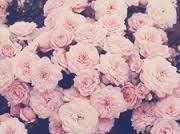 Who doesn't like flowerss...???
