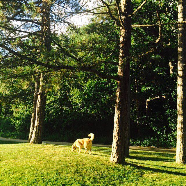 Blissful evening! #nature #summer